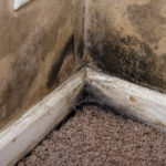 mold removal houston, mold removal cleanup houston