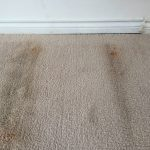 mold removal houston, mold cleanup houston